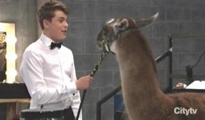 Cam finds a llama General Hospital